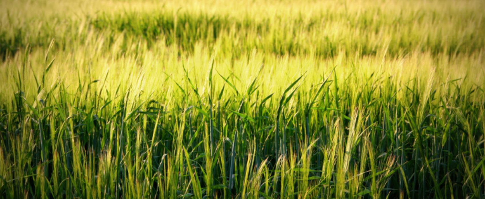 Товары для сельского хозяйства и фермерства - ФермерМ - Товары для фермеров и хозяйств